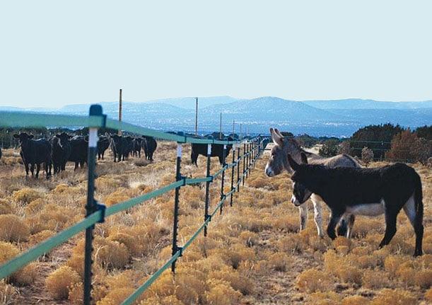 Clôture séparant des boeufs et des ânes.