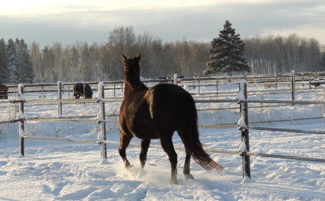 paddocks_snow