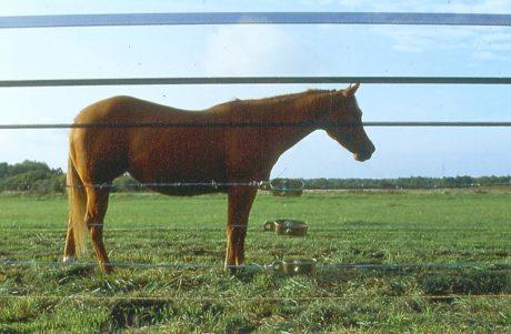 Comparaison de visibilité entre clôtures.